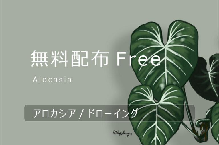 無料配布Free|アロカシアのキャッチ画像