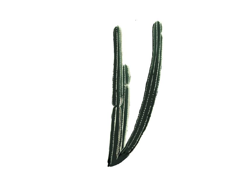 サボテン単体